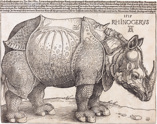 albrecht-durer-the-rhinoceros-national-gallery-of-art